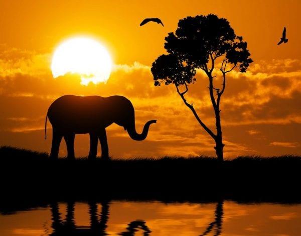 6 Tips For An African Safari Wedding And Honeymoon