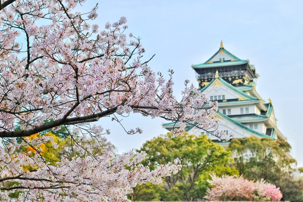 Blooming blossom in Japan