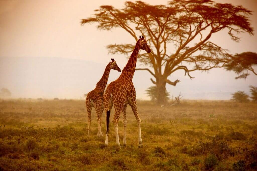 African Safari Adventure