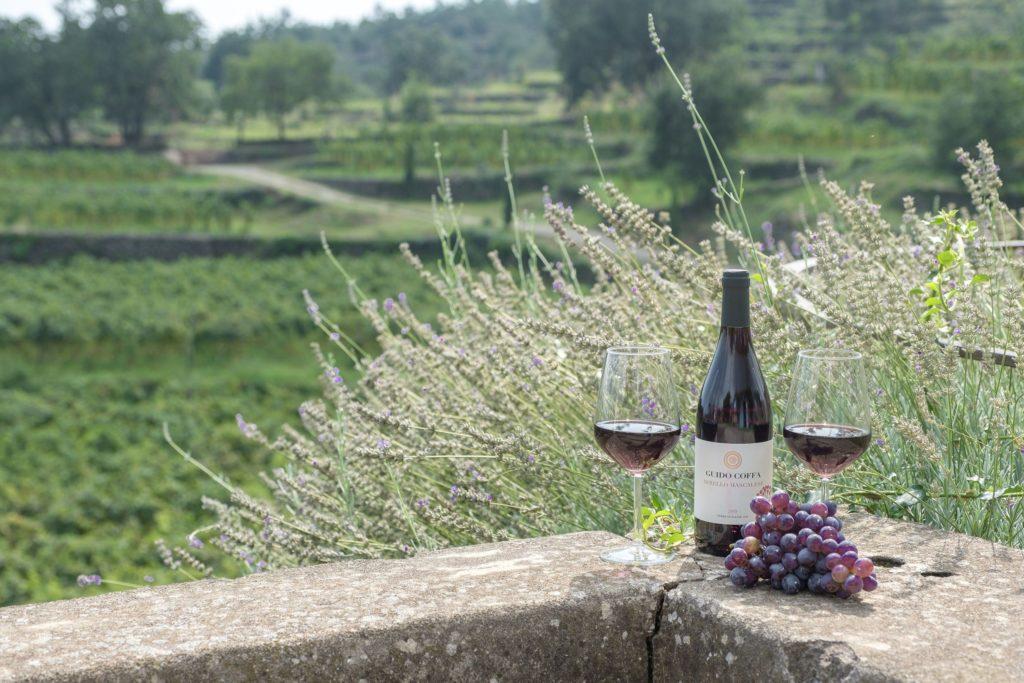 Fall Harvest Wine Season in Europe