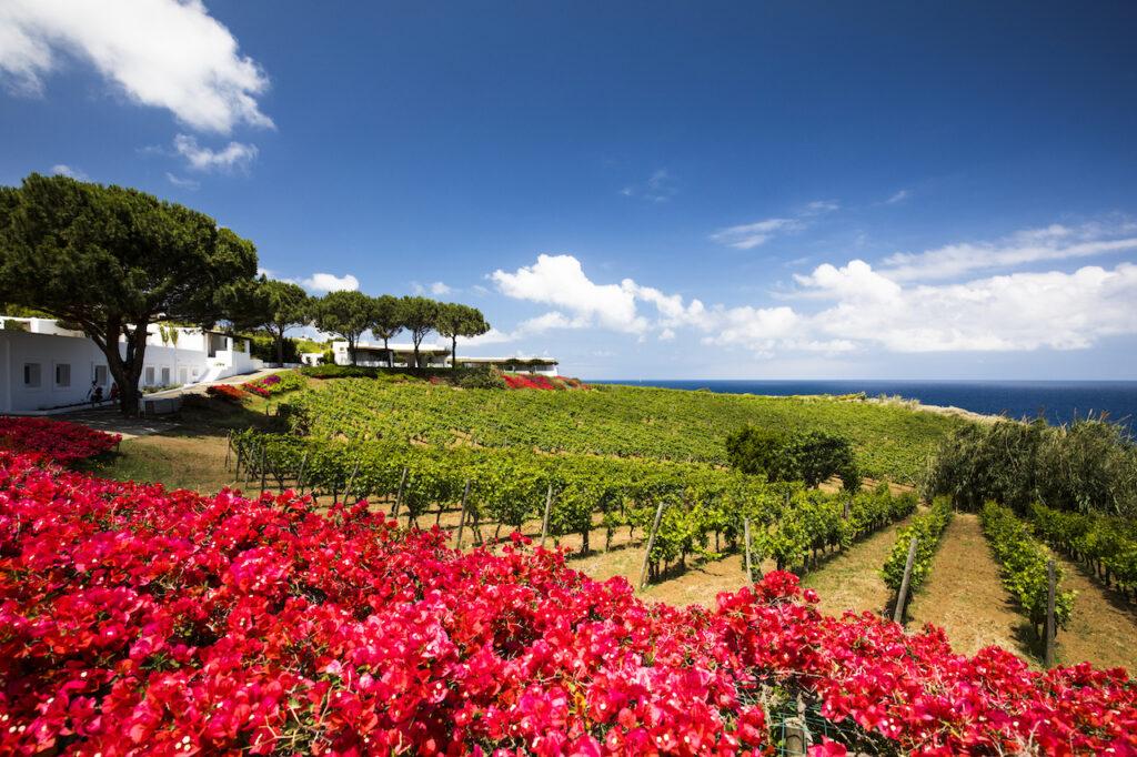 vineyards & gardens with sky
